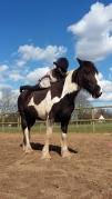 Horseback Yoga